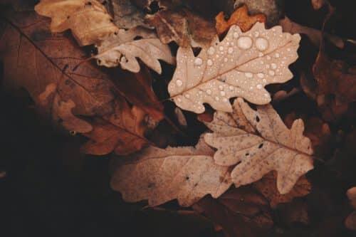 Autumn Positivity